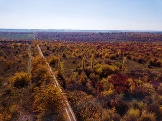 Panoramic aerial view from drone of beautiful landscape with dirt road through autumn forest in a red and yellow tones on a background of clean blue sky.