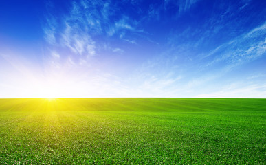Green meadow and sun.