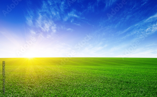 Wall mural Green meadow and sun.