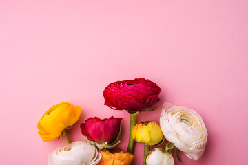 Colorful flowers on a pink background. Copy space.