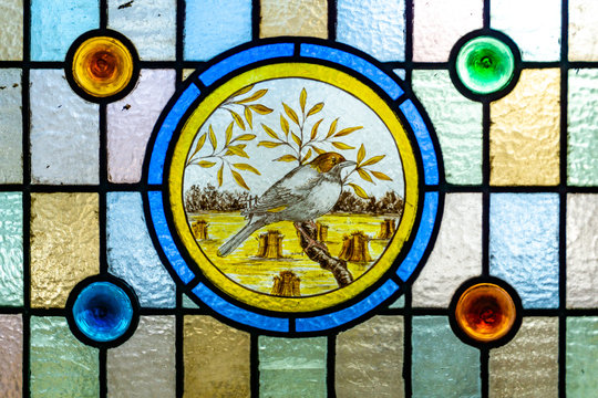 Stained glass window. Portrait of a bird in stained glass