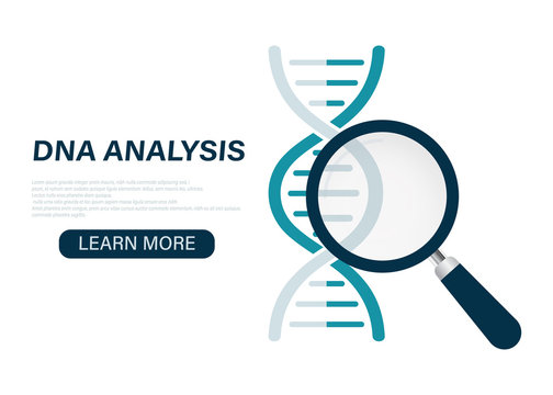 DNA analysis icon, genetics testing. dna chain in magnifying glass sign. paternity testing