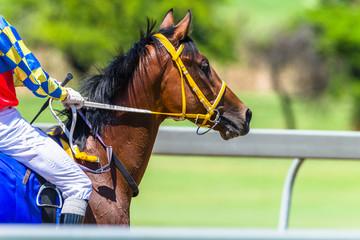 Race Horse Closeup Abstract Portrait Rear Track