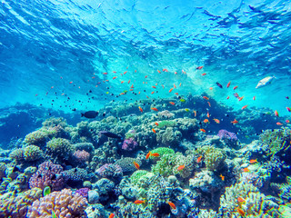 Fototapeten Riff colorful coral reef and bright fish