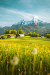 Fototapete - Idyllic landscape in the Alps with blooming meadows in springtime