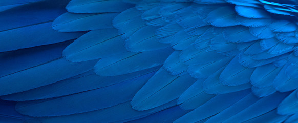 Closeup macaw feathers for background