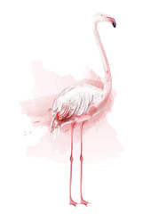 Flamingo watercolor Vector. pink bird isolated on white illustrations