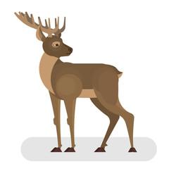 Deer animal. Elegant creature with horns. Forest