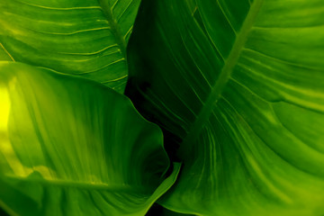 green leaves so beautiful for background