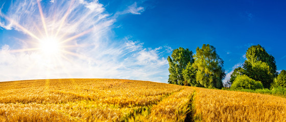Summer landscape with golden cornfield and bright sun