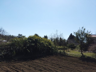 filed of countryside in Japan