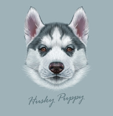 Husky animal dog cute face. Vector Alaskan puppy head portrait. Realistic fur portrait of Siberian dog on gray background.