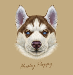 Husky animal dog cute face. Vector Alaskan puppy head portrait. Realistic fur portrait of Siberian dog on beige background.