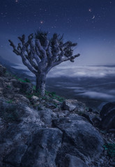 gray tree on rocky mountain during night time