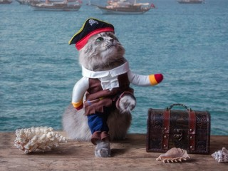 Funny kitten in a pirate costume