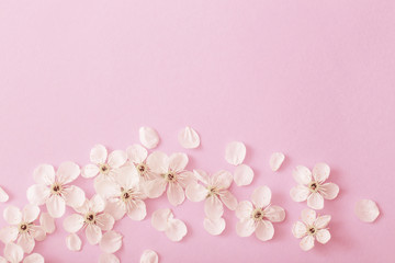 cherry flowers on paper background Wall mural