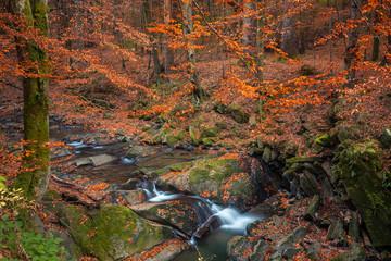 Bieszczady in autumn