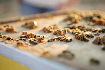 Close up of bees working on honeycomb cells on top of hive box