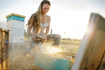 Beekeeper kneels to pour smoke on bee hive box