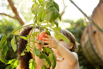 Toddler picks tomato while mother looks on