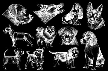 Graphical set of dogs isolated on black background,vector illustration
