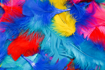 Bright and colourful feathers arranged on a white background Wall mural