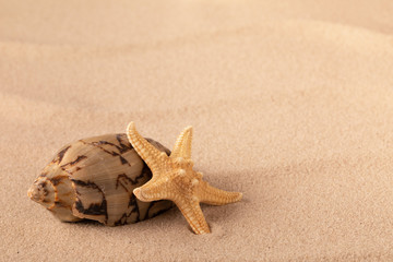 Mollusk and starfish on beach sand. Sandy texture background with copy space. Concept for summer vacation and freedom.