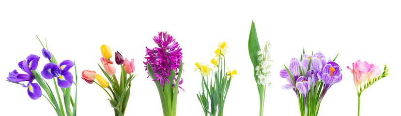 Obraz violet hyacinth flowers - fototapety do salonu
