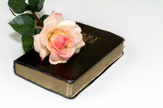 Rose on Holy Bible
