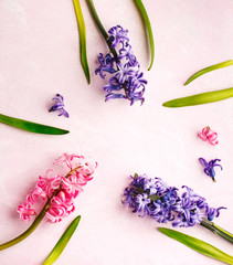 Hyacinths. Spring flowers on pink background, copy space