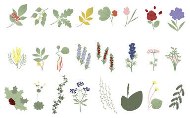 Set of flowers, leaves and plants. Vector. Botanical elements. Wildflowers, grasses, leaves, branches. Collection of garden and wild foliage, flowers. Illustrations on white background
