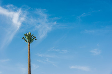 big green African palm tree against the blue sky