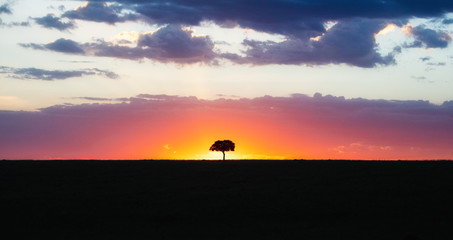 Wall Mural - Solitary Tree Silhouette at Colorful African Sunset