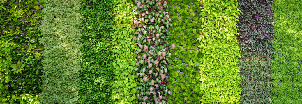 Eco green plant background
