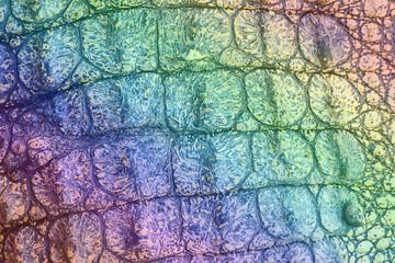 crocodile leather texture Wall mural