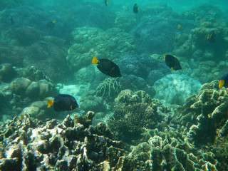 Diving, Socotra island, Yemen
