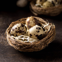 Quail eggs in nest on dark background. Easter holiday