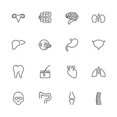 Organs- Flat Vector line Icons
