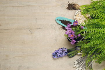 Potted flower, ground, spade and gloves on a wooden table. Spring gardening background.