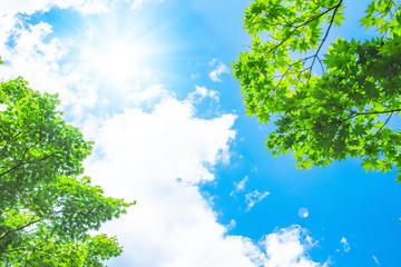 青空と太陽と新緑 Wall mural