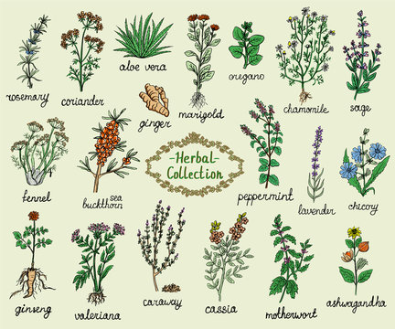 Medicine herbs collection, hand drawn doodle illustration