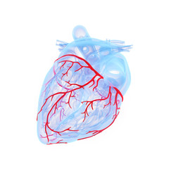 3d rendered medically accurate illustration of the coronary blood vessels of the heart