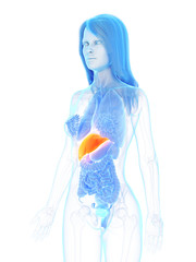 3d rendered medically accurate illustration of a womans liver