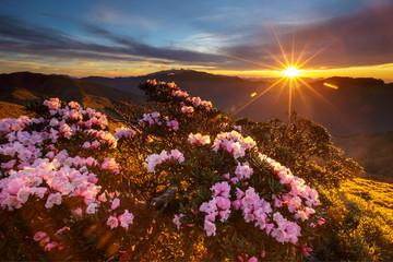 Alpine rhododendron