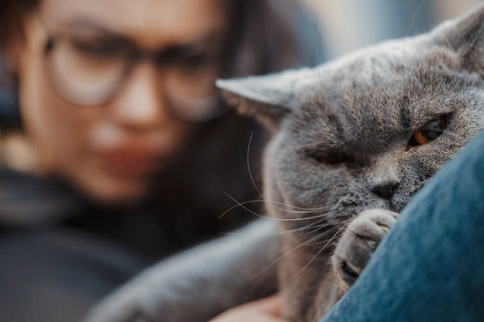 Young attractive angry woman blurred on background and discontented cat.