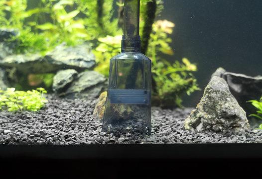 Siphon gravel cleaner tool in the aquarium.