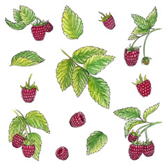 Hand drawn watercolor illustration set of raspberry elements on white background.