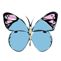 isolated, colorful butterfly, contour, blue