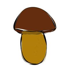 isolated mushroom boletus mushroom