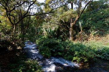 Najmiejszy park narodowy w Meksyku - Barranca del Cupatitzio